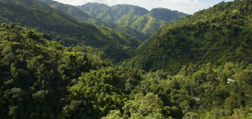 Blue Mountain in Jamaica