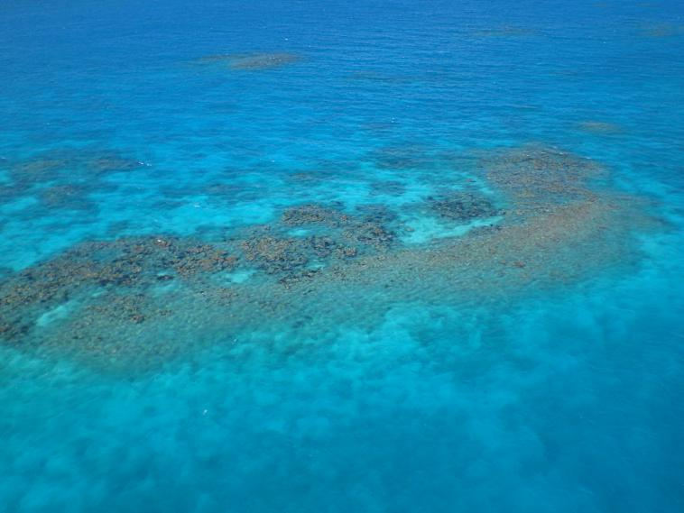A coral reef in Antigua
