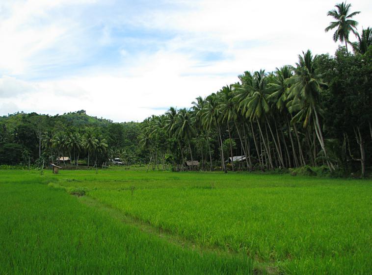 philippines_landscape
