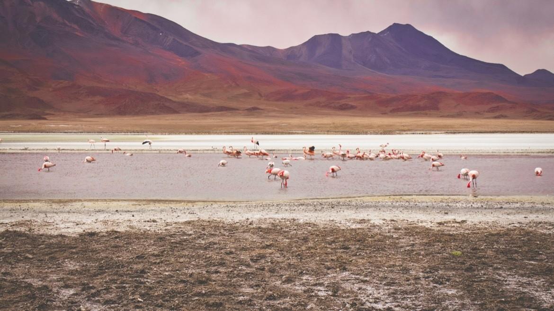 Laguna Roja in Bolivia