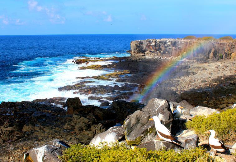 galapagos-espanola-rainbow-birds