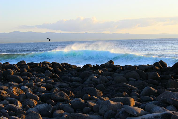 North Seymour Island Galapagos