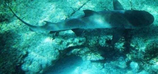 ecuador-galapagos-shark