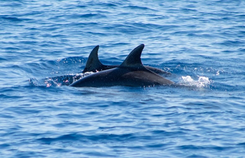 Dolphins near Los Barriles Mexico
