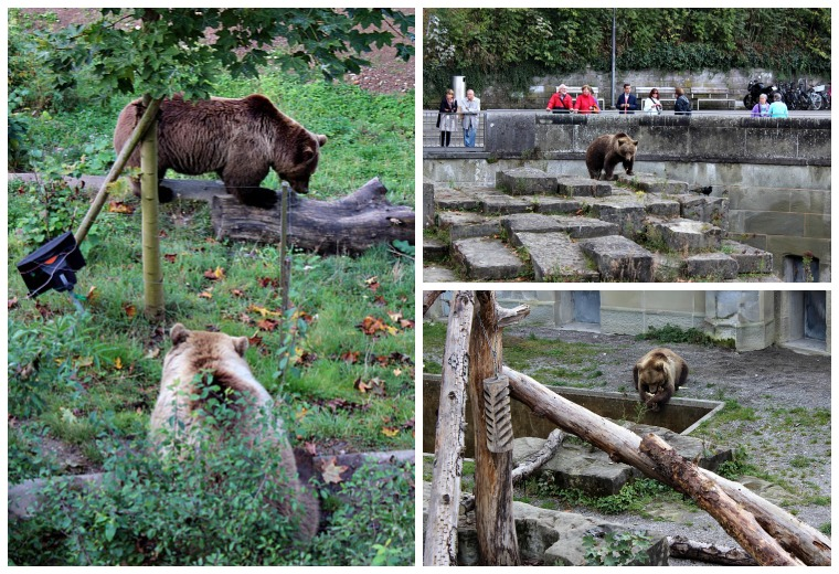 switzerland-bern-bears