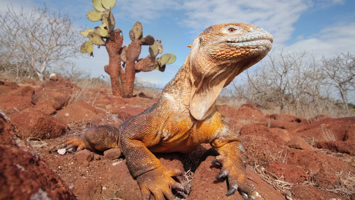 Animals in the Galapagos Islands