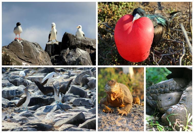 galapagos collage
