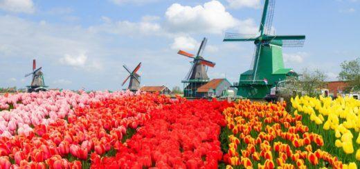 Day trip to the Zaanse Schaans windmills in the Netherlands