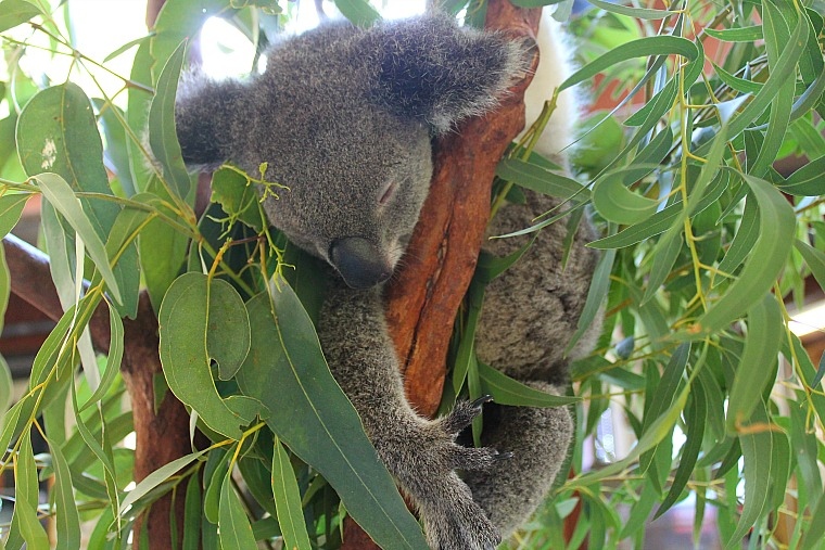 Things to do on Hamilton Island Australia