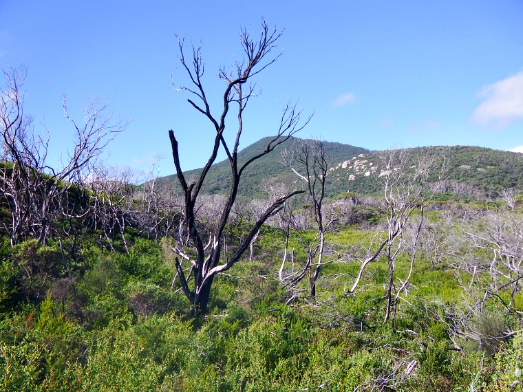 Must see spots in Australia's Wilson's Promontory National Park