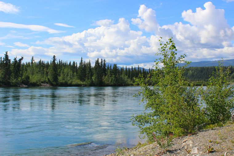 The Yukon River whitehorse