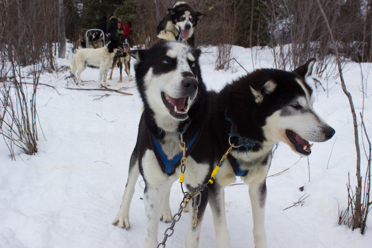 Canada-Yukon-Dog-Mushing-3