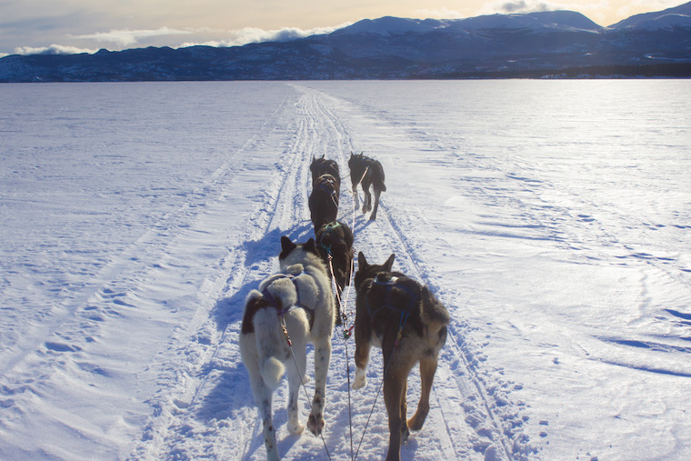 Canada-Yukon-Dog-Mushing-32