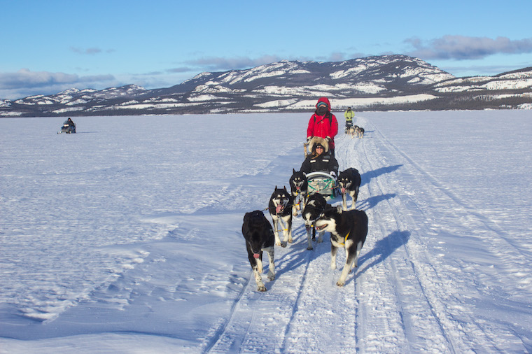 Canada-Yukon-Dog-Mushing-33