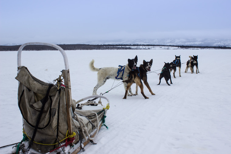 Canada-Yukon-Dog-Mushing-6