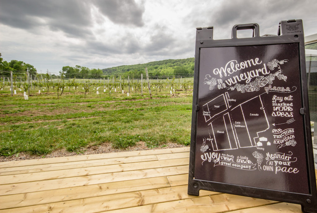 Wolfville wineries: The best Annapolis Valley vineyards