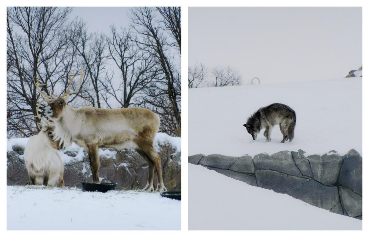Assiniboine Park Zoo, Winnipeg, Manitoba