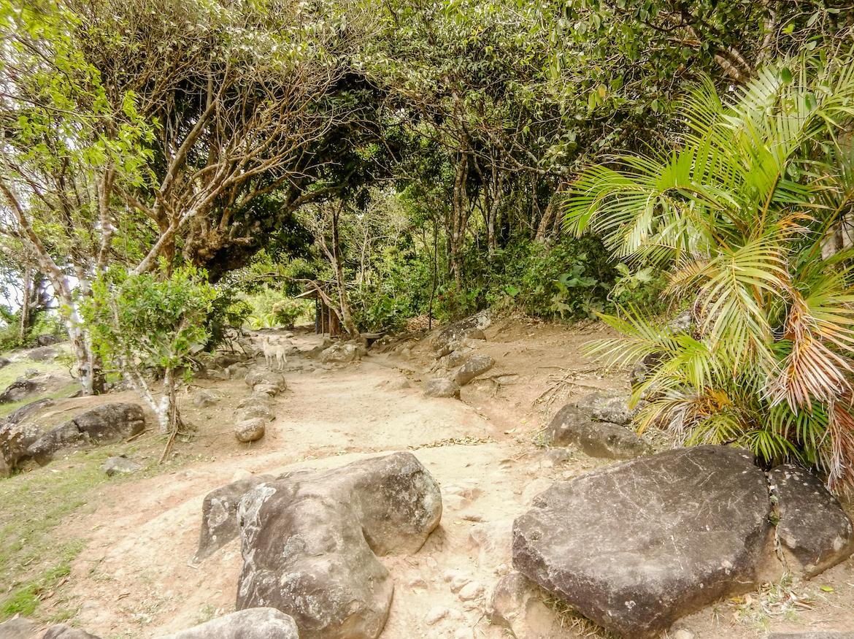 Tet Paul Nature Trail in Saint Lucia