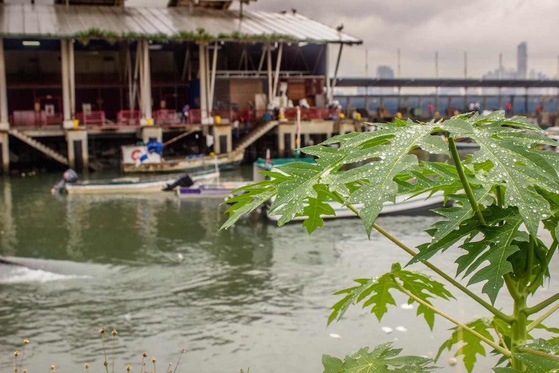 Mercado de Mariscos in Panama City, Panama