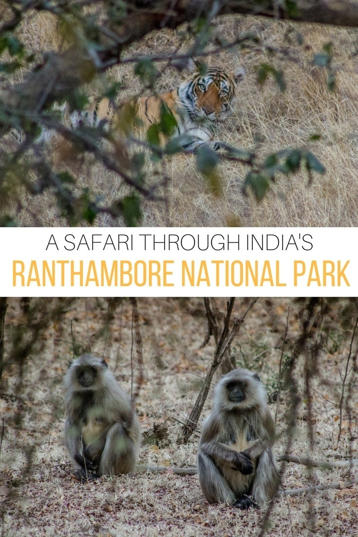 India's Ranthambore National Park is a top tiger sanctuary in India, and one of the best places in the country to enjoy a safari. Here's what it's like to go tiger tracking.