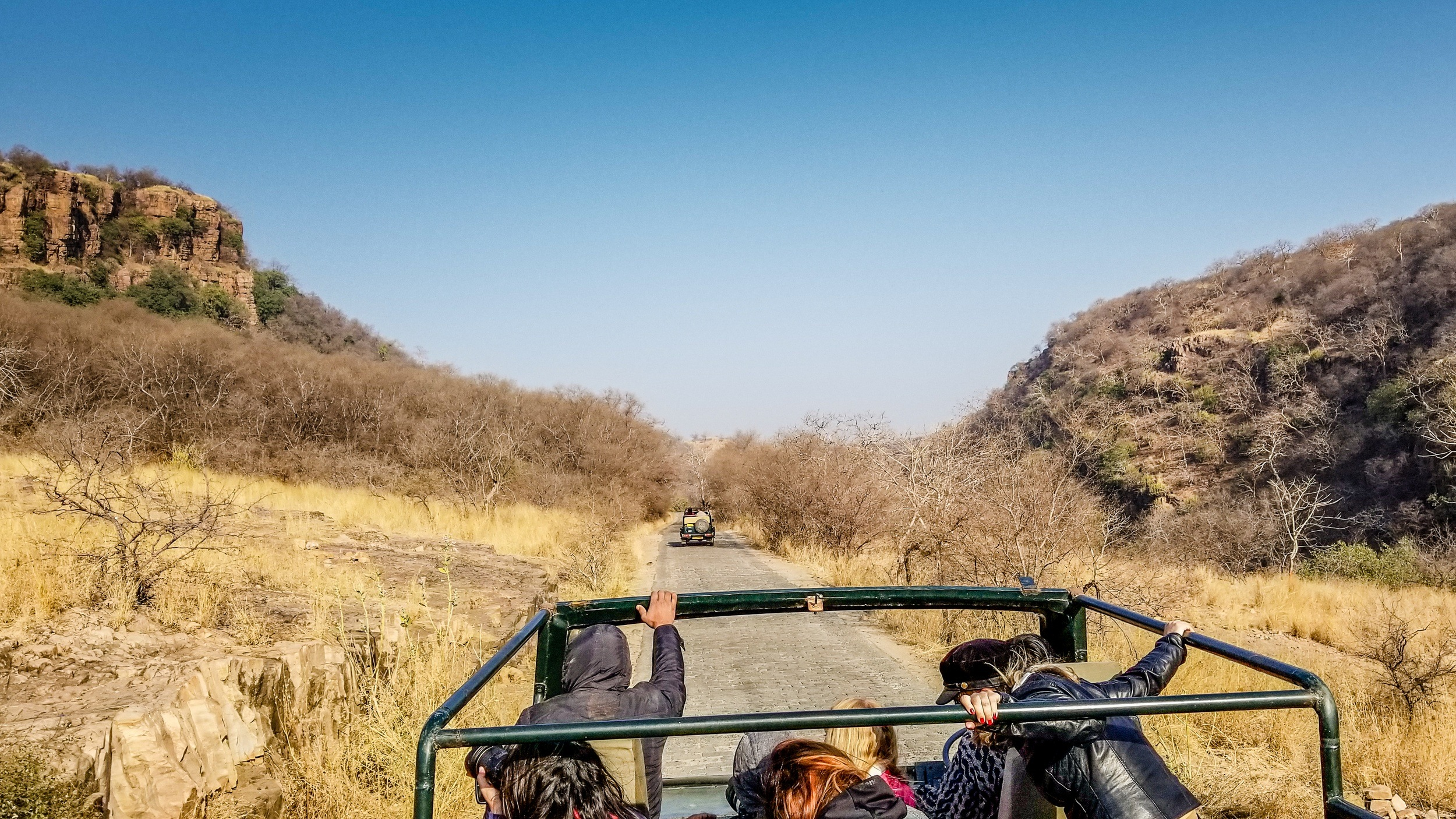 A safari in Ranthambore National Park, India