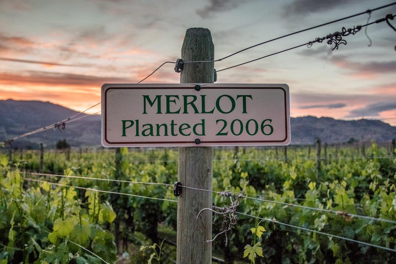 Oliver Twist winery, Half Corked Marathon wine run