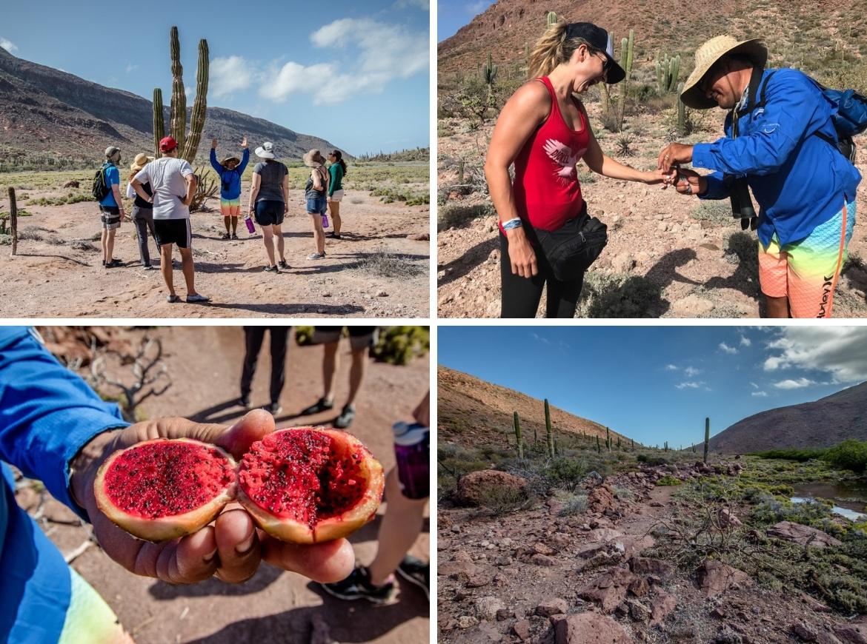 Camp Cecil Mexico glamping El Cardonal hike