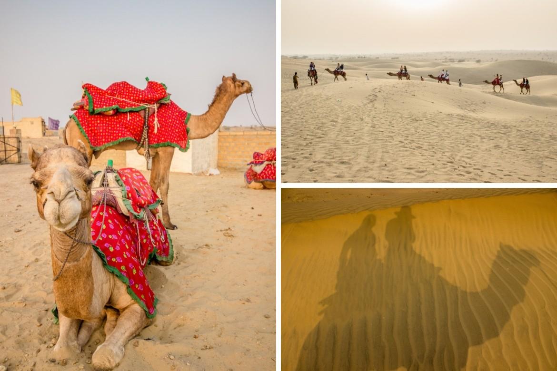 Best of Jaisalmer sightseeing, a camel ride in the Thar Desert