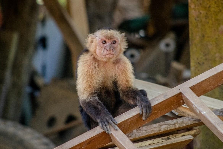 Curú National Wildlife Refuge, Costa Rica