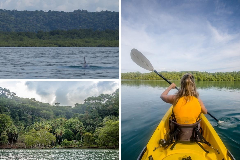 The Saladero Rainforest in Costa Rica with UnCruise Adventrures