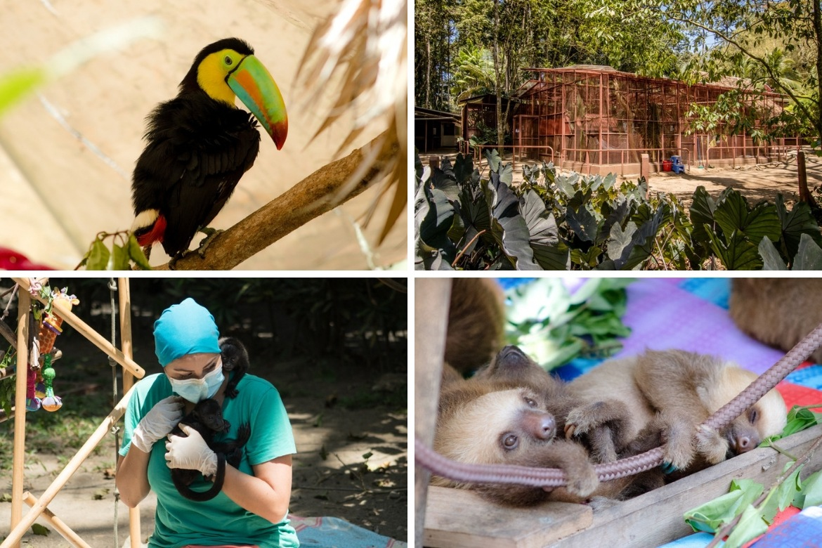 Fun things to do in Puerto Viejo, Costa Rica- visit the Jaguar Rescue Centre