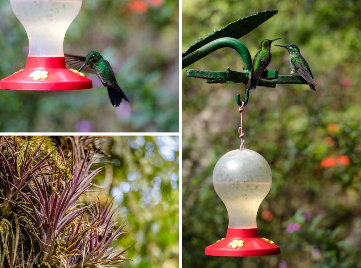 The hummingbird garden in Monteverde, Costa Rica
