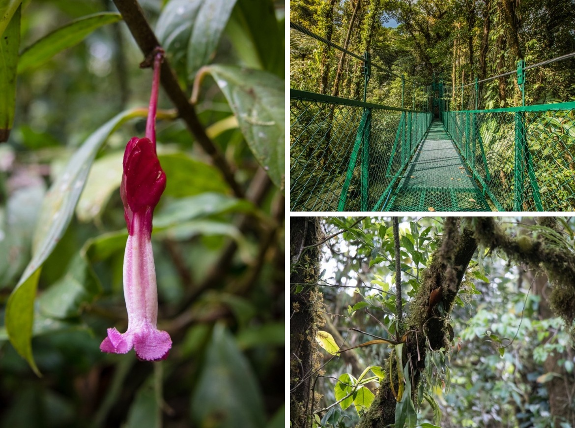 A nature tour through the Monteverde Cloud Forest Reserve