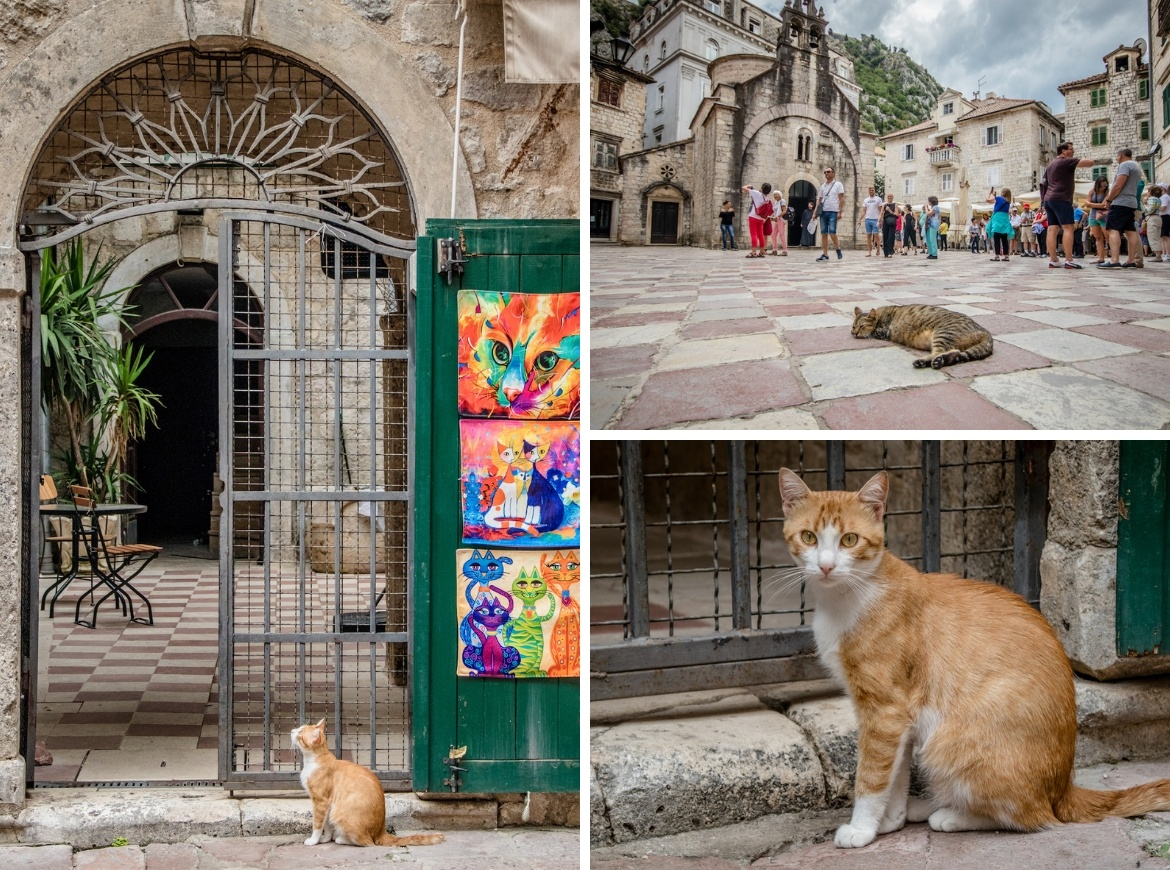 The cats of Kotor, Montenegro