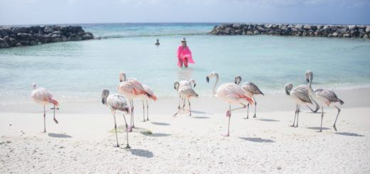 Flamingos on De Palm Island, Aruba