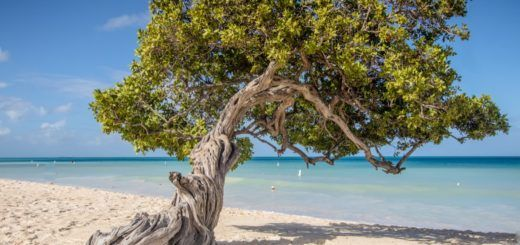 The famous Divi Divi tree on Eagle Beach