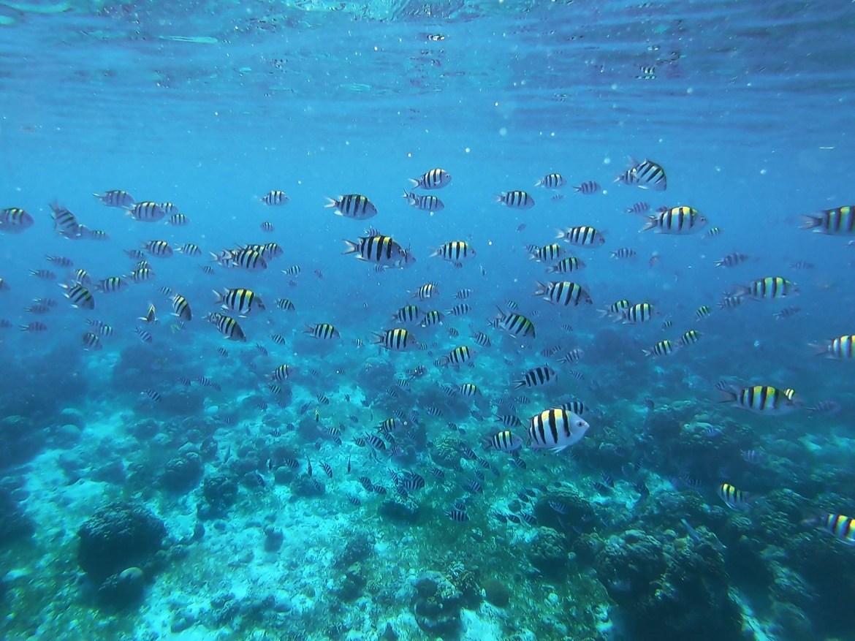 Philippines-diving-Cebu-fish