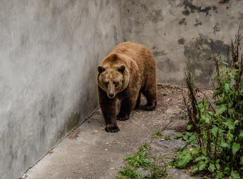 A bear at the Cesky Krumlov castle