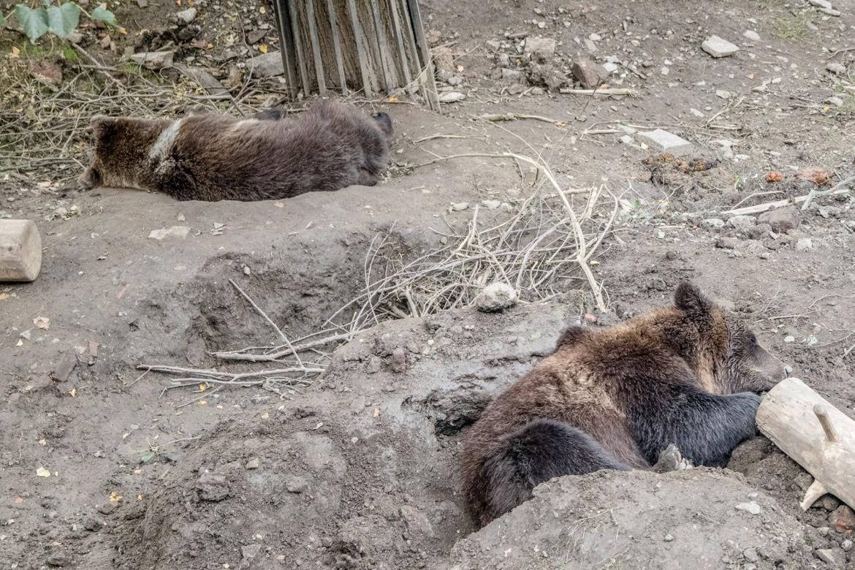 Bears at the Cesky Krumlov castle