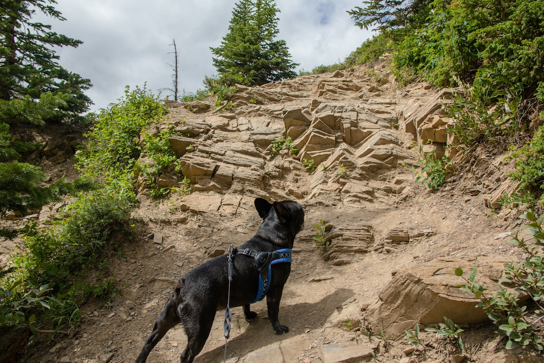Nahahi Ridge is one of the best Kananaskis hikes