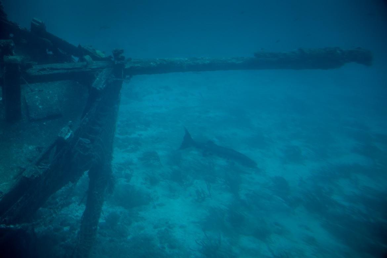 The submarine tour in Aruba