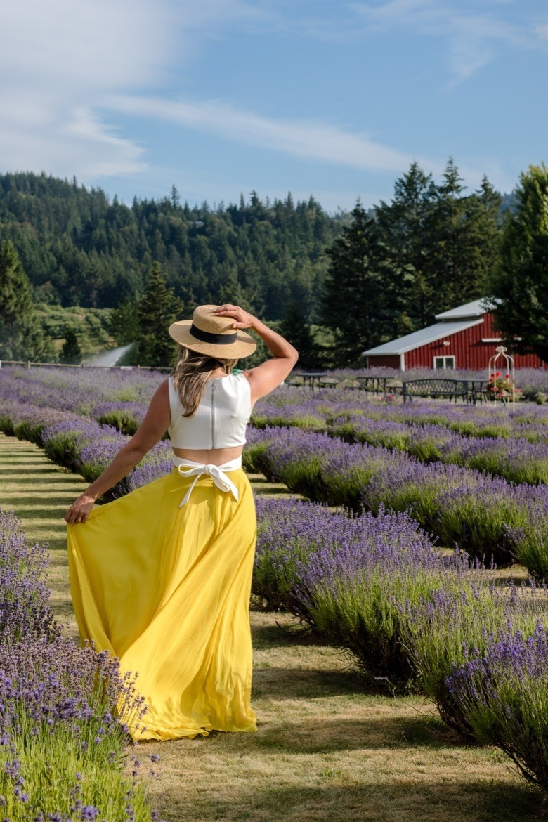 Lavender farms in Oregon