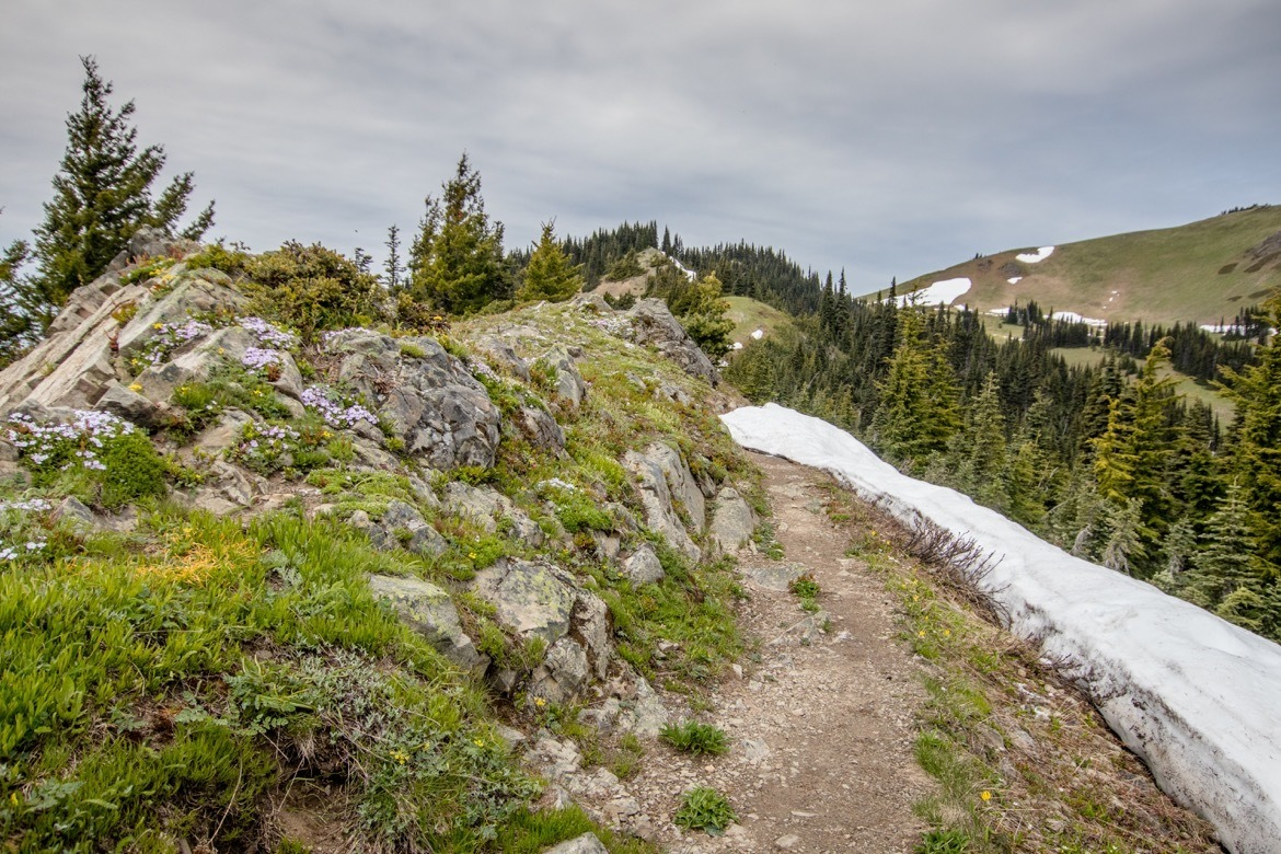 Hiking Hurricane Ridge is one of the best things to do in Olympic National Park