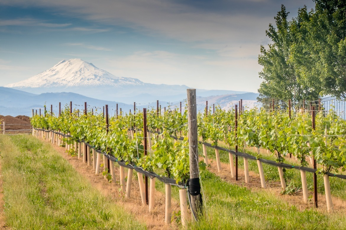 Stave & Stone is one of the best Hood River wineries