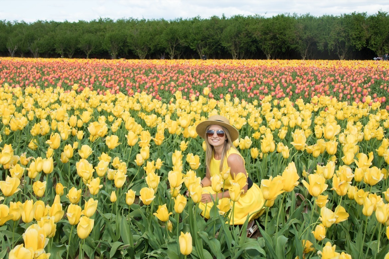 The Wooden Shoe Tulip Festival in Oregon
