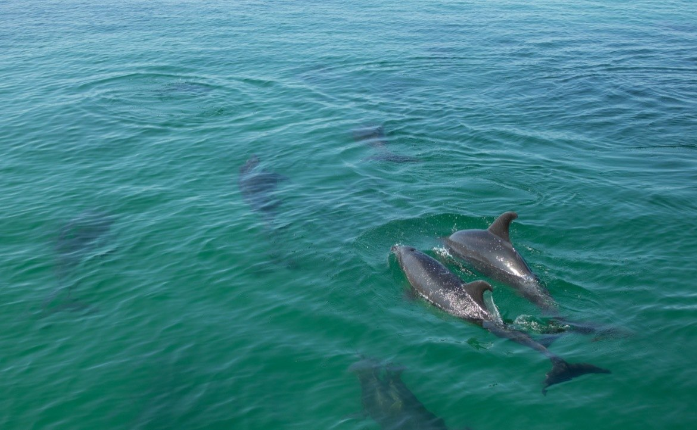 Dolphins in Parque Nacional Bahia de Loreto