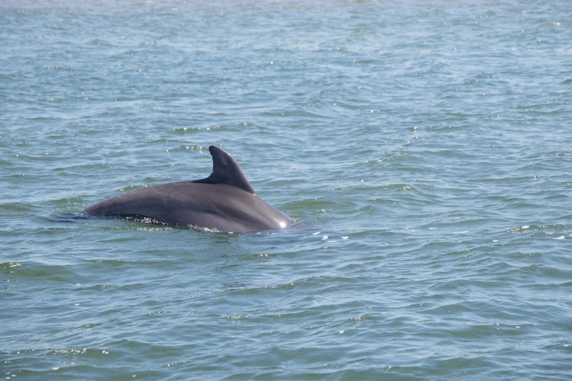 A dolphin in Magdalena Bay